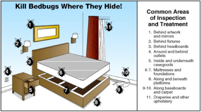Where Bed Bugs Hide